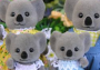 Billabong Koala Family