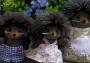 Bramble Hedgehog Family