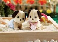 Beagle Dog Twins